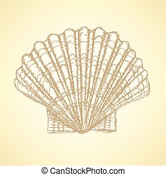 Sketch sea shell in vintage style, vector
