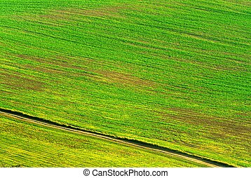 green field diagonals - green brown field detail with...