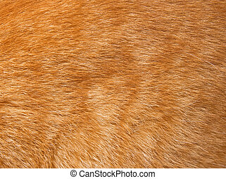 Cat fur texture - Close-up of ginger cat fur for texture or...