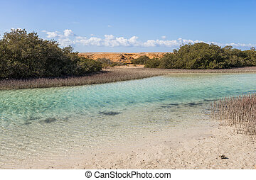 Mangrove bay in the national park Ras Mohammed, Sinai, Egypt...