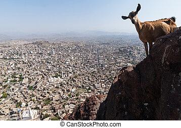 City in Yemen - View of the city of Taizz in Yemen