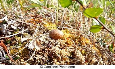 tiny little bird egg - egg out of nest little birds on stalk...