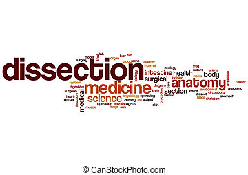 Dissection word cloud concept