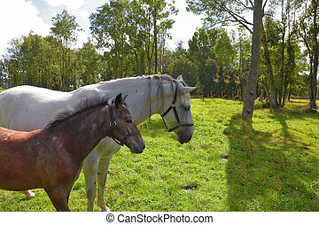 The white horse and bay foal