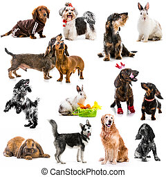 Collage of photos of pets on a white background