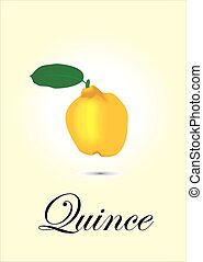 Quince chart vector illustration