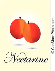 Nectarine chart vector illustration
