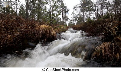 Fast stream in the taiga - Stream boiling in shallow waters....