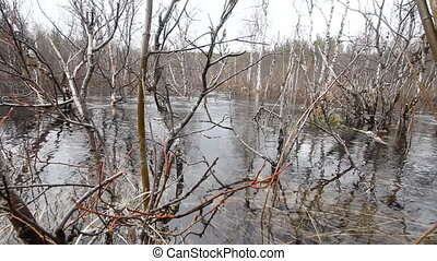 River flood in the spring in the forest - Picture of spring...