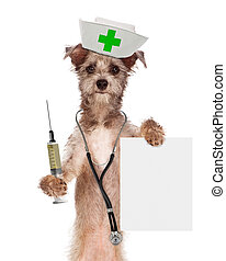 Dog Nurse With Shot and Sign - A dog dressed as a nurse with...