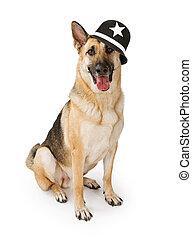 Police German Shepherd Dog - German Shepherd police dog...