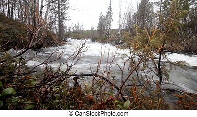 Taiga flowing spring river - Rapid river in forest, rifts....