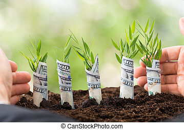 Businessman Protecting Sapling - Close-up Of Businessman's...