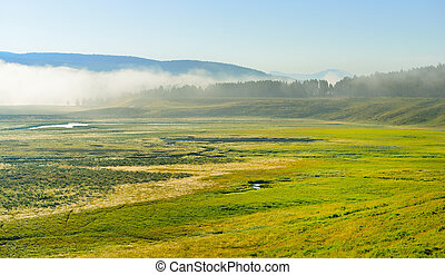 fog over the meadow in Hayden Valley of Yellowstone National Park in summer