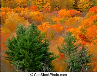 autumn in new england (a digital painting) - autumn colors...