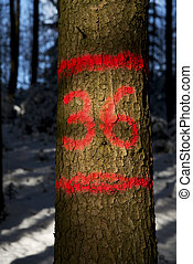 tree mark - in red color marked tree in a snowcovered...