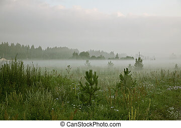 morning fog - Fog on the early morning at the road in...