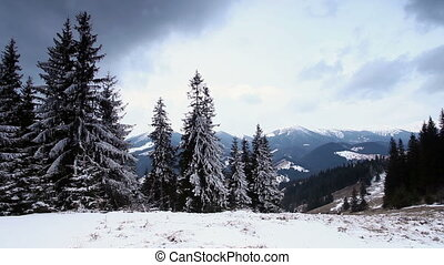 Snow covered fir trees in mountains