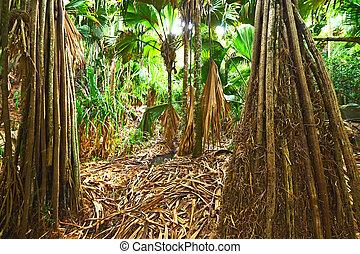 Tropical rainforest at Seychelles. Valle de Mai, Praslin.
