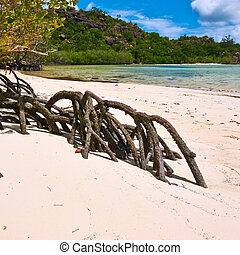 Mangroves at low tide, Seychelles