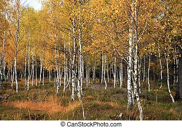 foresta, colorito, cadere