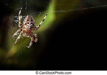 Garden orb spider background