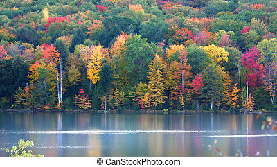 Autumn Landscape - Colorful trees by the lake shore during...