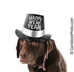 Happy new year dog - Old and sad labrador retriever wearing...