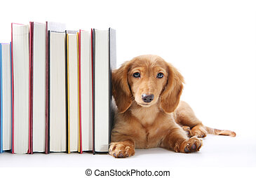 Book end puppy