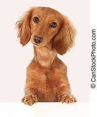 Dachshund puppy topper.