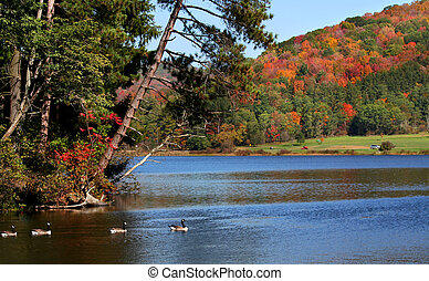 Allegheny Forest - Scenic autumn landscape in Allegheny...