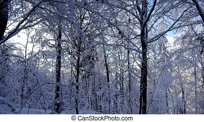 Snowy forest, snow on trees in winter
