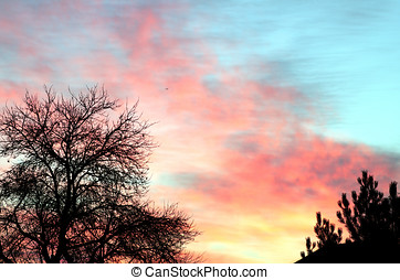 Dawn in the foreground with two trees