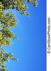 leaves of laurel tree in the sky