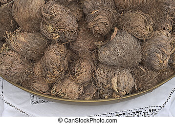 Rose Of Jericho, an annual herb tumbleweed