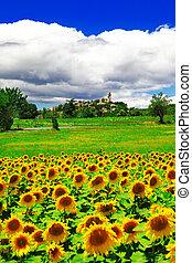 Tuscany,Italy - Scenic view of Tuscany