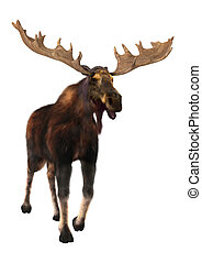 Moose - 3D digital render of a moose (North America) or...