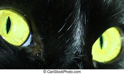 Black Cat's Eyes - close-up of black cat's eyes