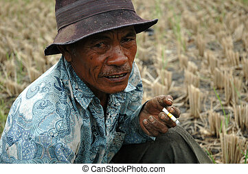 old farmer - photograph of old farmer getting smoke after...