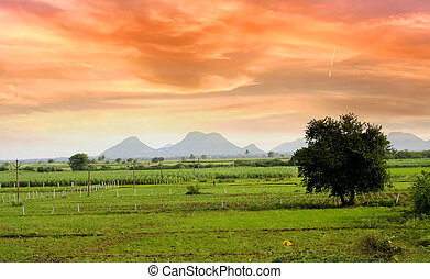 Scenic Landscape In India - Single tree in the middle of...