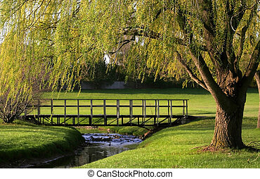 Spring Scene - Willow tree branches over the stream in early...