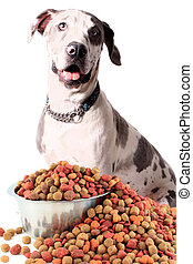 Great Dane and dog food