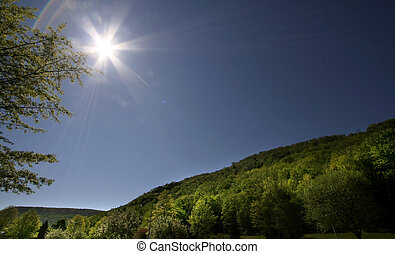 Summer Scene - Bright sun over Allegheny national forest in...