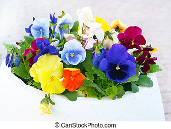 White Pot with Viola Pansy Flowers - Masonry outdoor flower...