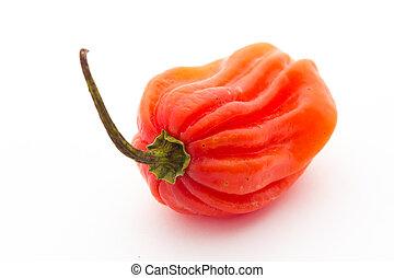habanero, pimenta,