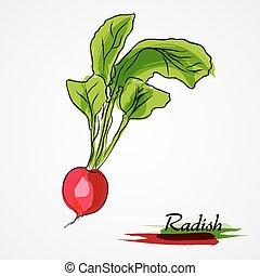 radish - Hand drawn vector ripe radish on the light...