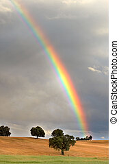 rainbow - pretty rainbow in a field with trees