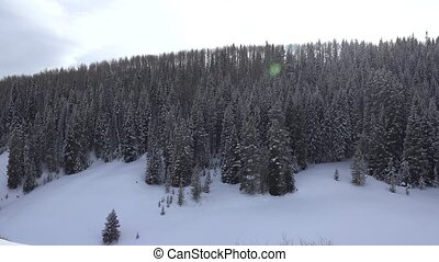 Snow Covered Mountain Forest - A slow pan of the alpine...