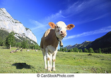 funny cow is standing in front of mountains