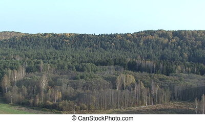 Autumn view from the birch